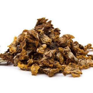 DIVOZEL KVET ( Verbascum densiflorum ) - bylina, 10g